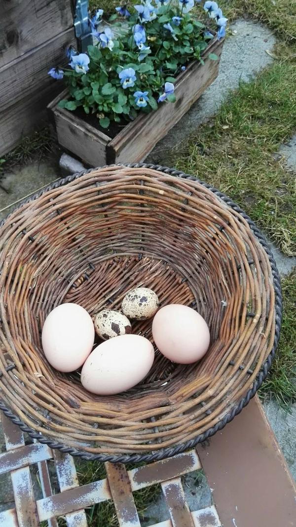 Eggløsning og andre løsninger…. som kommer med våren…