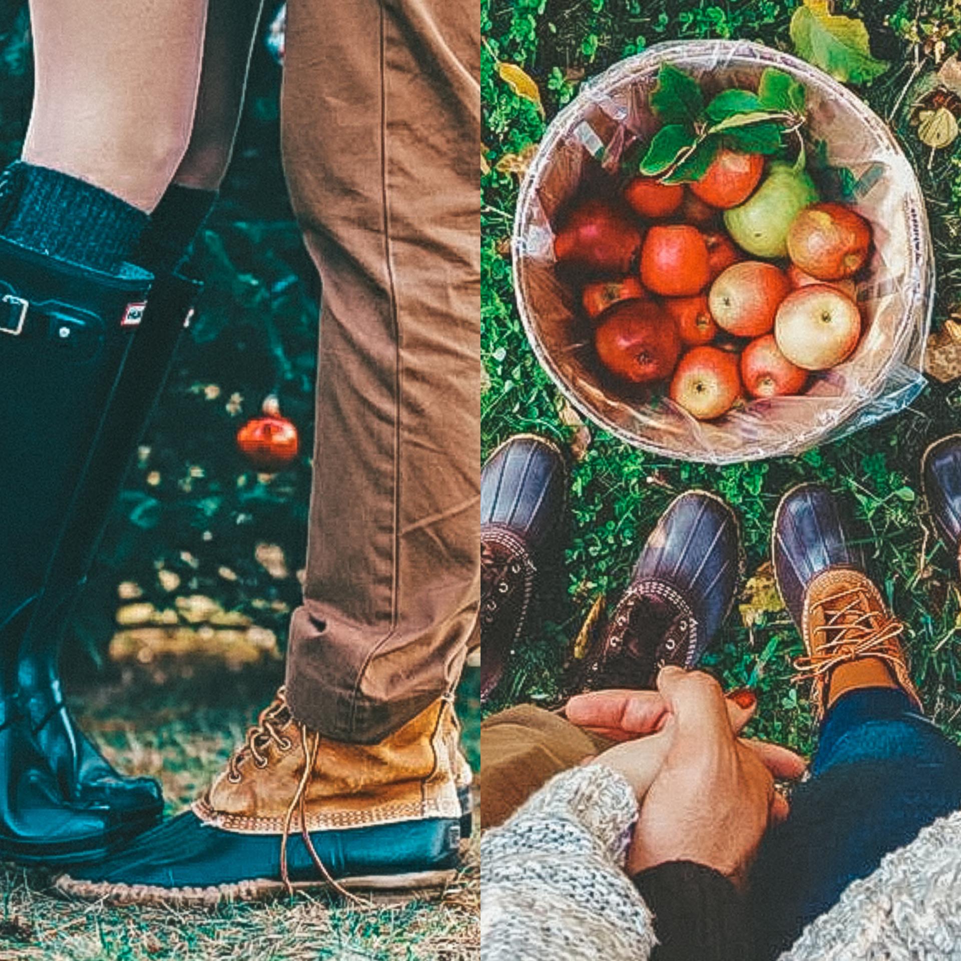 høst date