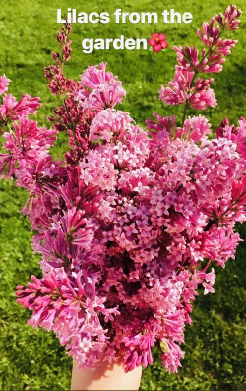 blomsterbukett fra hagen