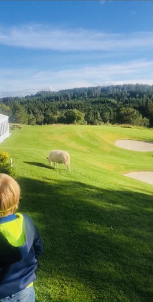 Barn og golf