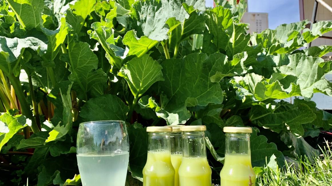 Rabarbra juice – «sommerens sitron»