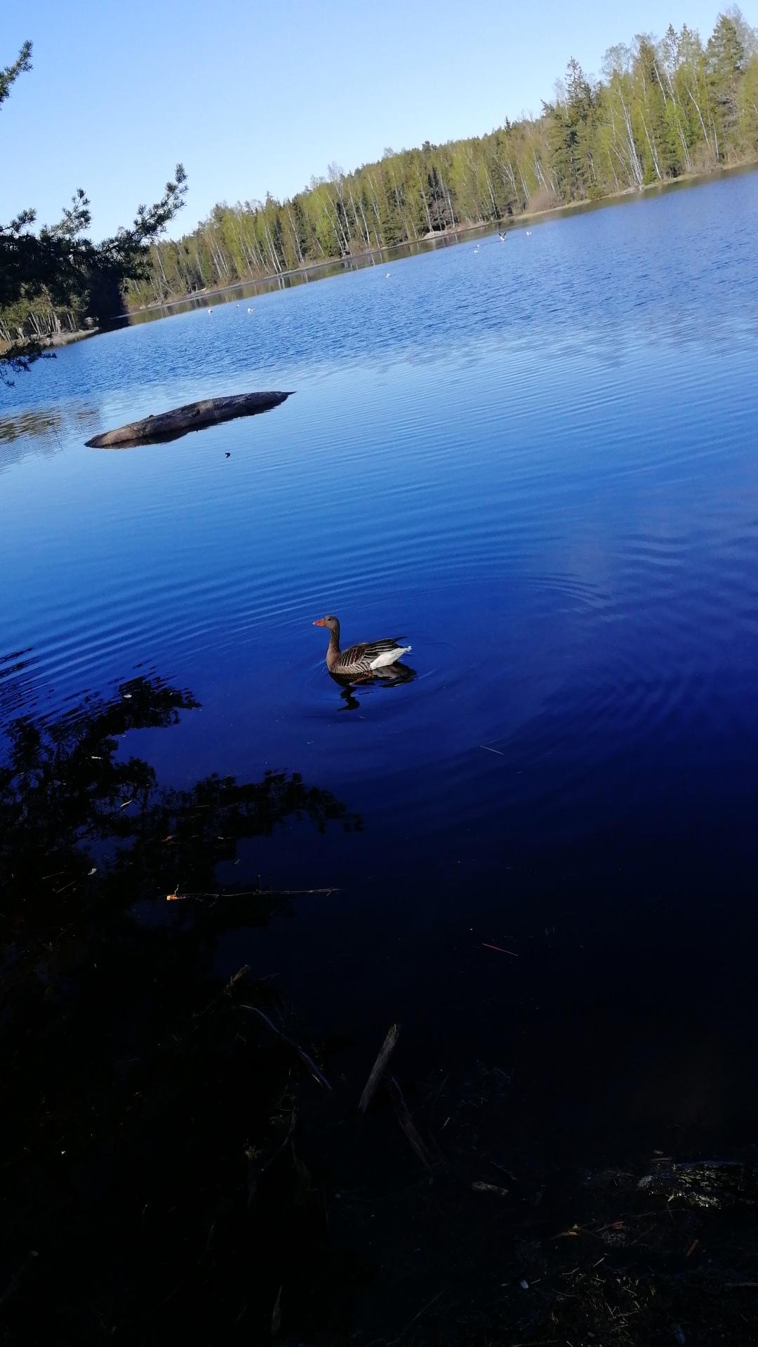 natur-bilder-naturbilder-drøbak-frogn-viken-skansen-øvredammen-dam-innsjø-and-gjess-blogg-blogger-blog-skog-trær-naturlig-grønt-