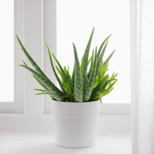 aloevera-aloe-vera-tips-råd-aloeverabrukemåter-aloeverabruksmåter-plante-superplante-isalicious-isalicious1-blogg-blog-blogger-blogging-blogg.no-isalicious.blogg.no
