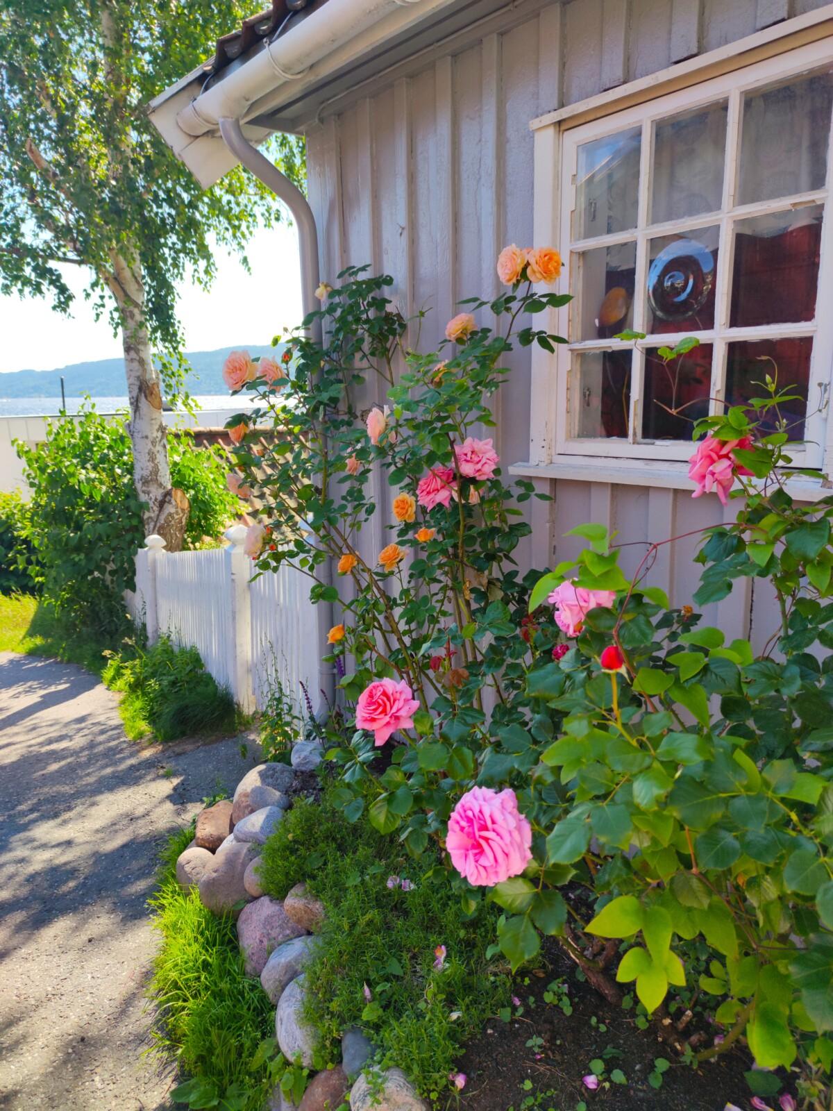 blogg-mindag-stil-mote-trend-foto-fotografier-bilder-natur-sjø-strand-drøbak-slush-sommer-hav-blomster-utsikt-balkong-mat-fiksekaker-isalicious1-isalicious-isalicious.blogg.no