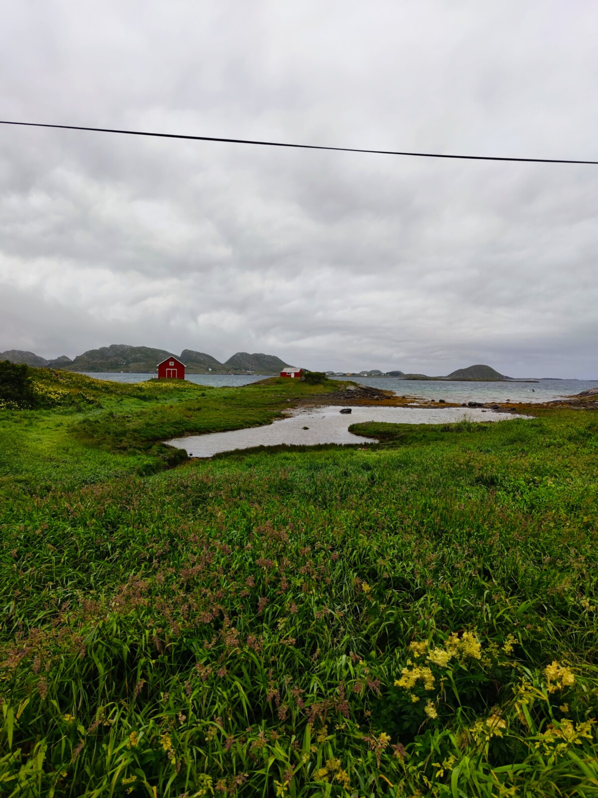 bildedryss-bilder-nordnorge-nord-norge-seløy-seløya-helgeland-herøy-sandnessjøen-mosjøen-natur-norge-norway-northofnorway-trondheim-vakkernatur-isalicious-klartvann-strang-norgesommer-norgessommer-sommer-helgelandskysten-isalicious.blogg.no-fisk-