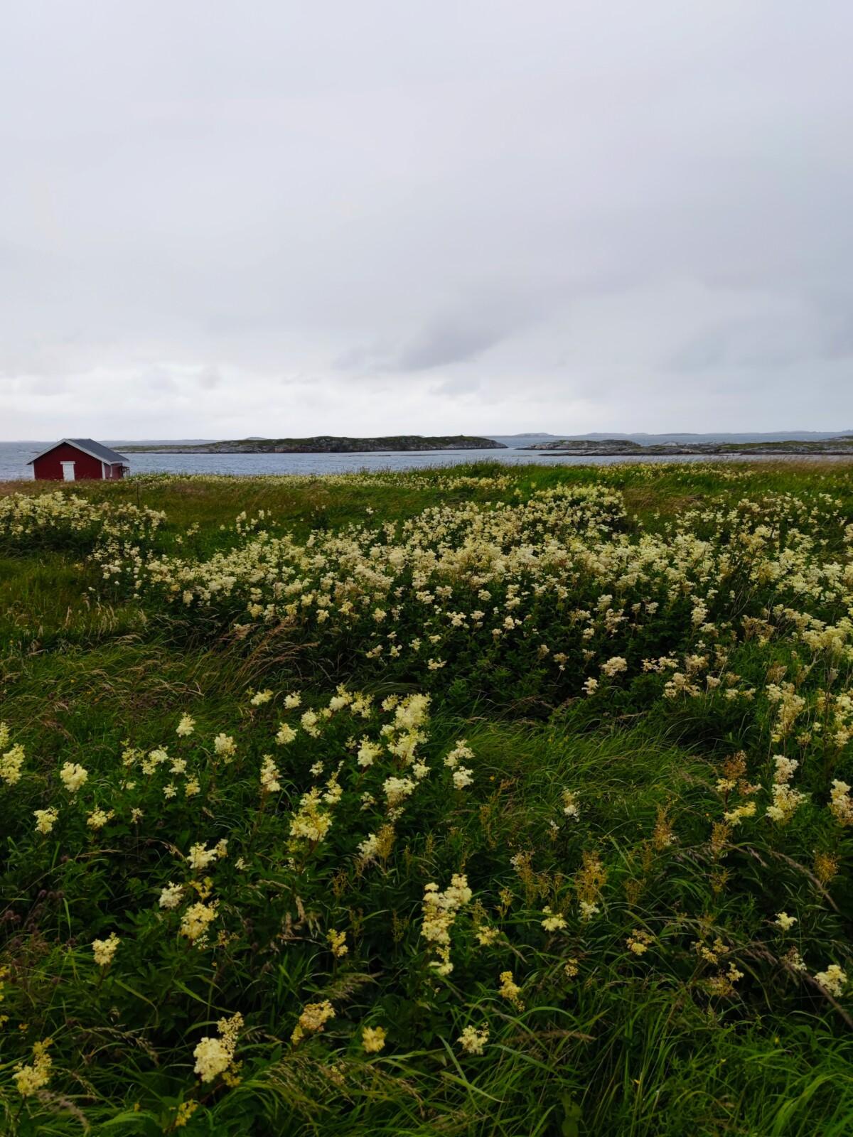 bildedryss-bilder-nordnorge-nord-norge-seløy-seløya-helgeland-herøy-sandnessjøen-mosjøen-natur-norge-norway-northofnorway-trondheim-vakkernatur-isalicious-klartvann-strang-norgesommer-norgessommer-sommer-helgelandskysten-isalicious.blogg.no-natur-fjell-strand-sjø-hav-