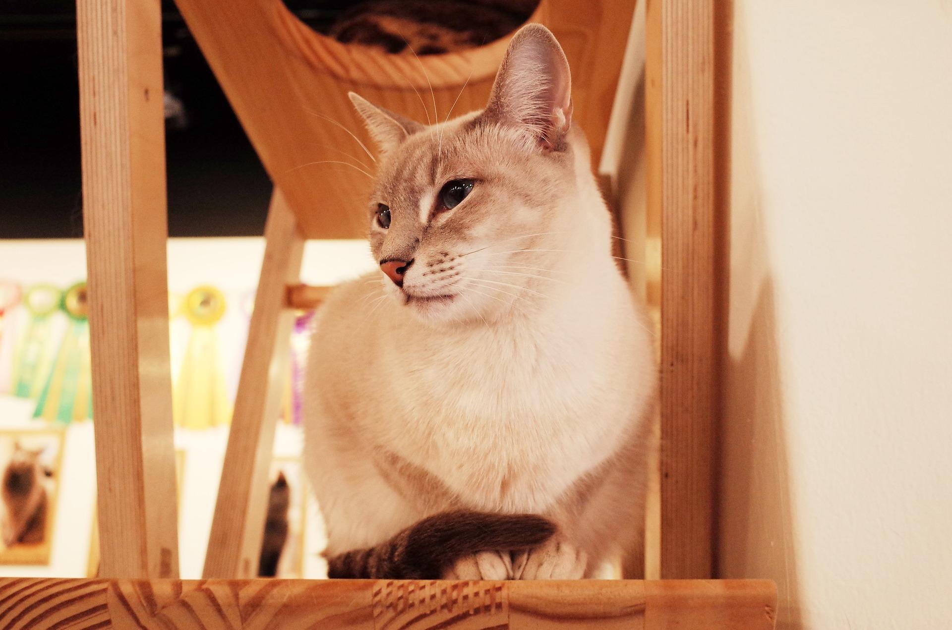 Kattekafeer i Polen