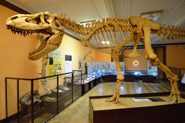 Dinosaurer i Warszawa? Evolusjonsmuseum