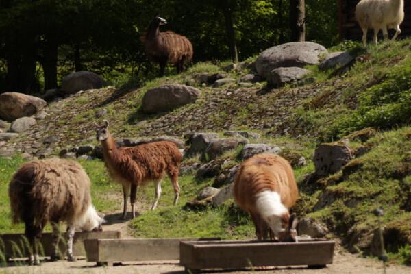 10 av de mest populære dyreparkene i Polen