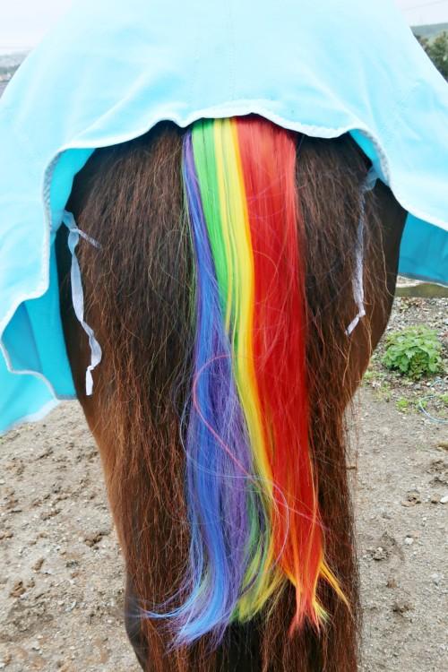 Rainbowhorse