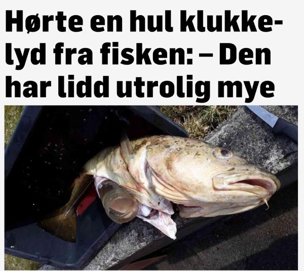 rikelig med fisk i havet dating