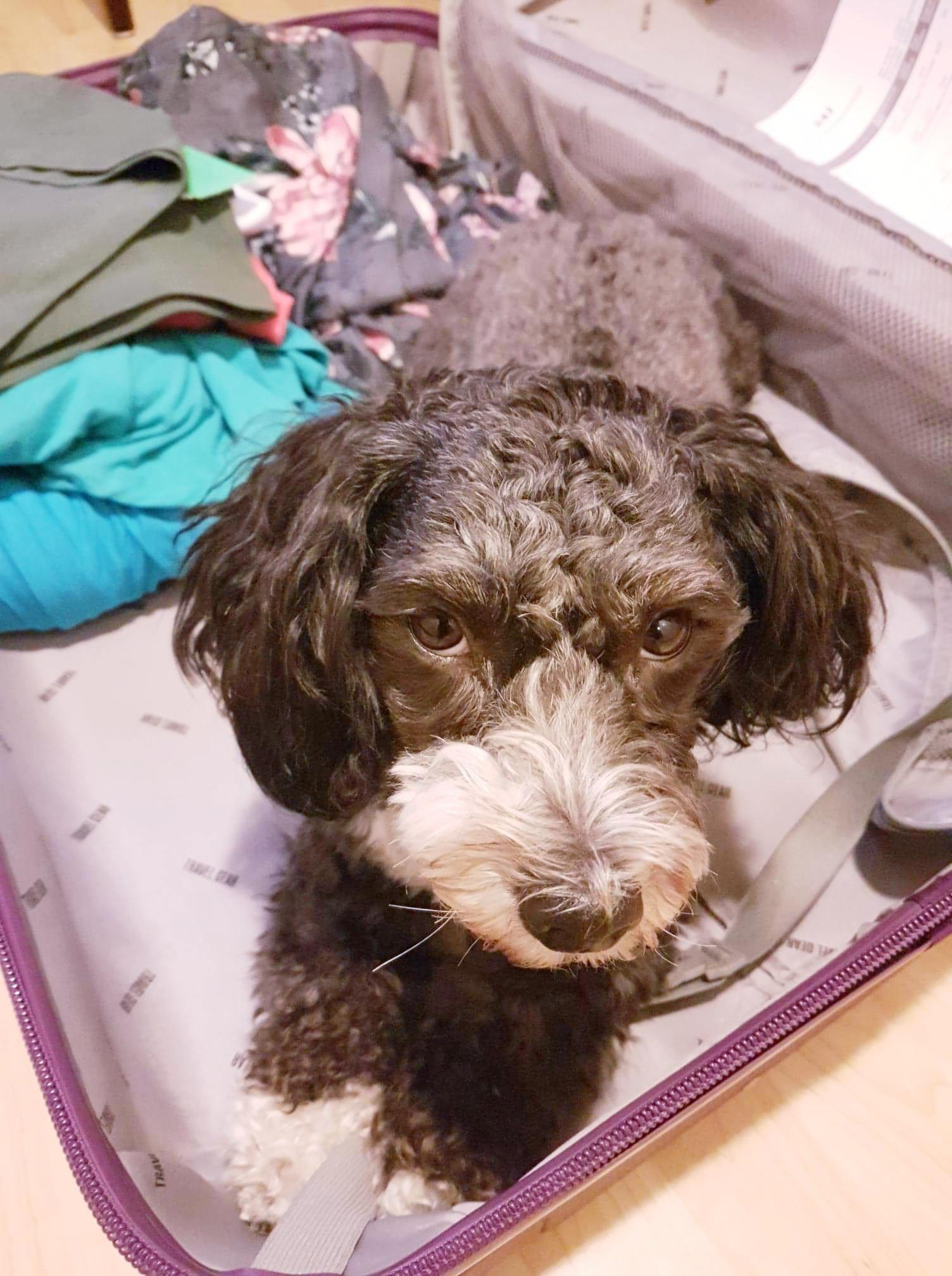 Snoopy i kofferten.