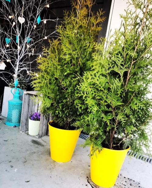 Veldig Siljemedvilje – Billige søppelbøtter, blir til blomsterpotter med BP-19