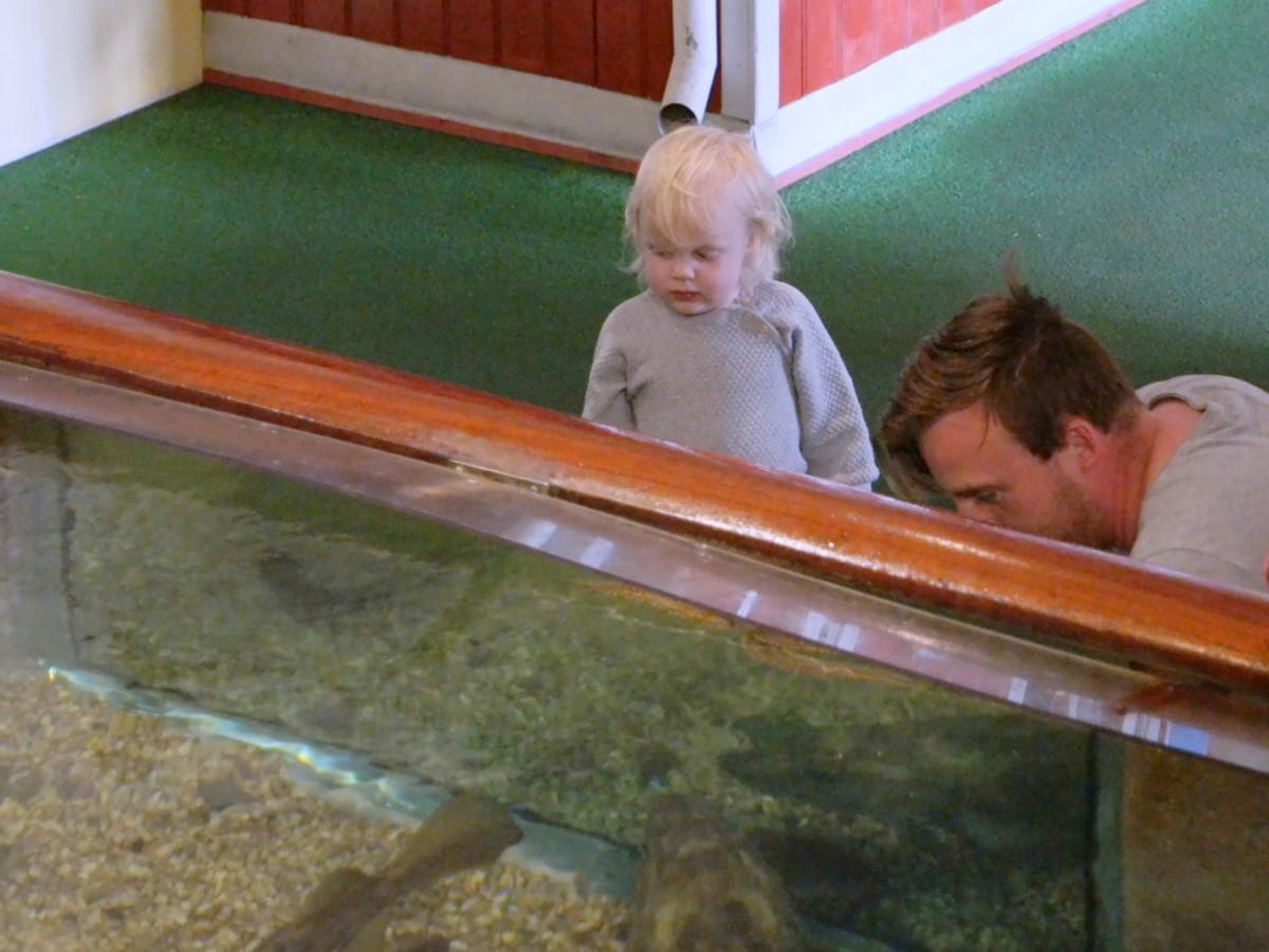toåring ser gjennom siden av akvariumet