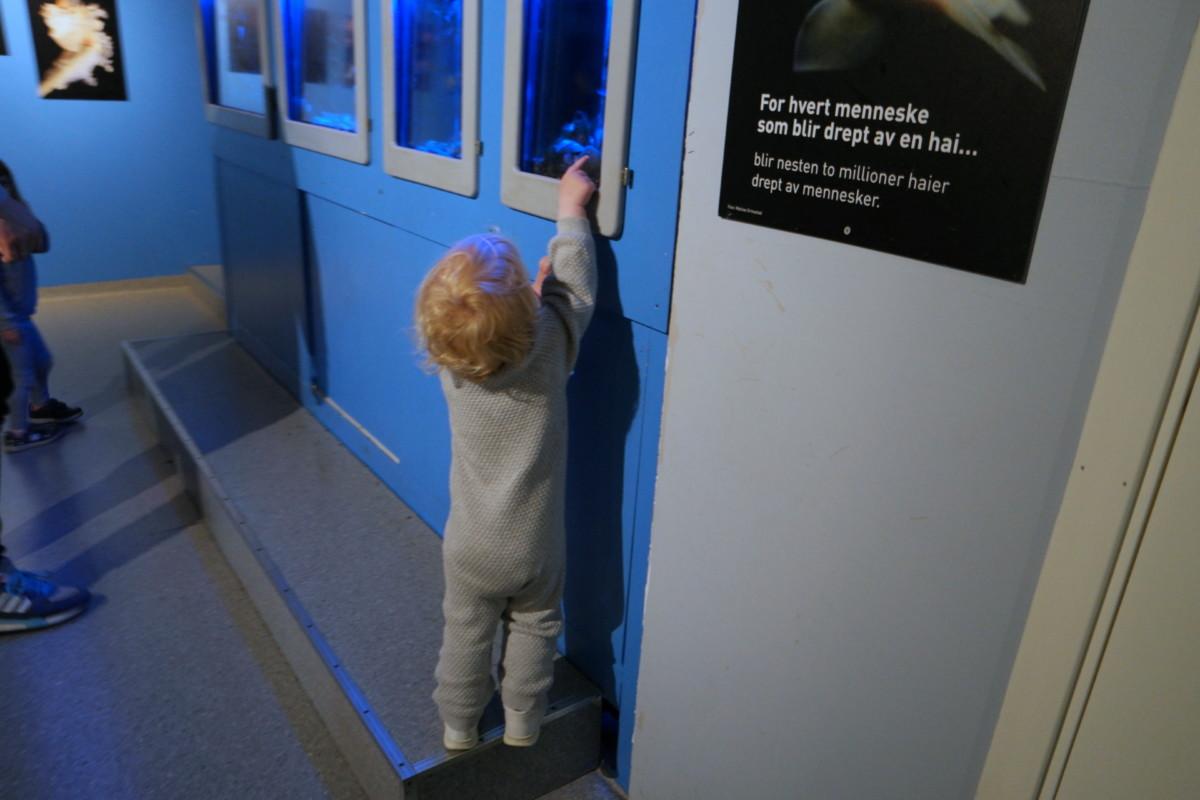 toåring som strekker seg opp og peker på et lite akvarium