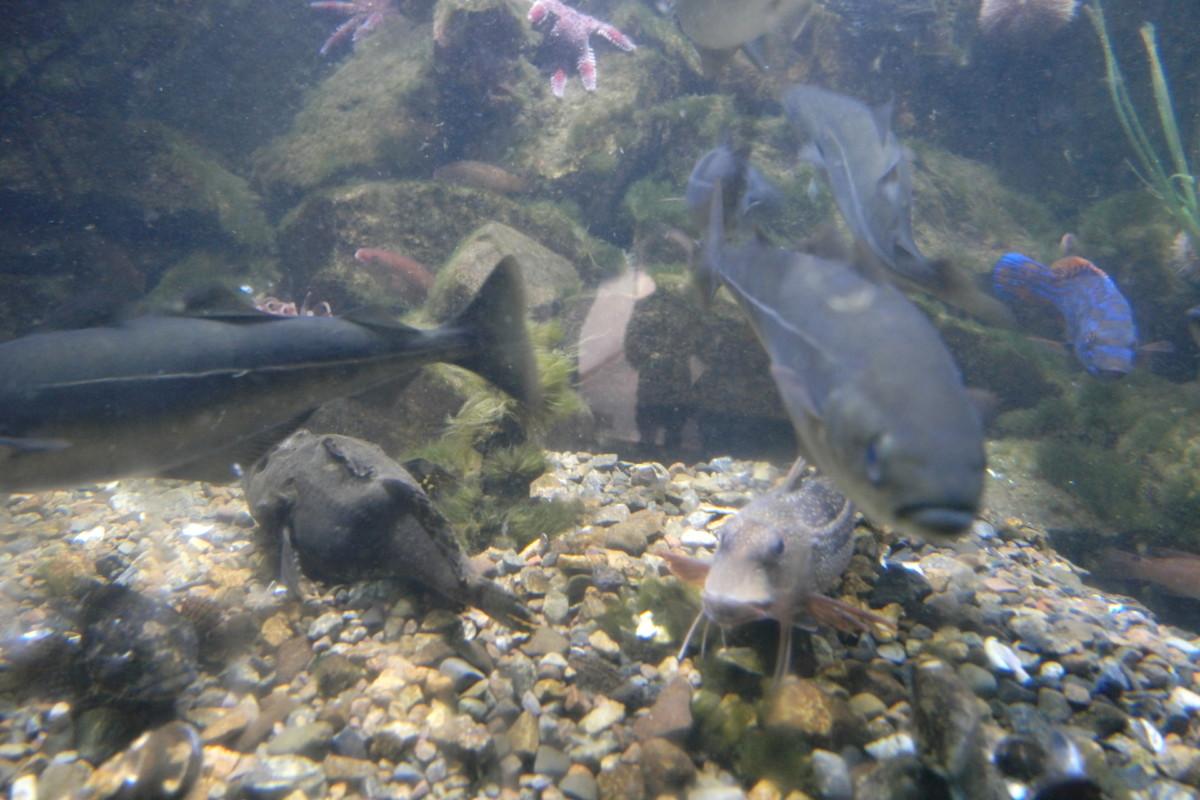 fisk bak glass