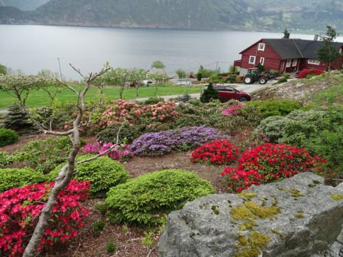 competitive price 24db5 3fc93 jeg fikk lov til å legge ut bilder av hagen   ) dette er torheim gartneri  på Eid i nordfjord