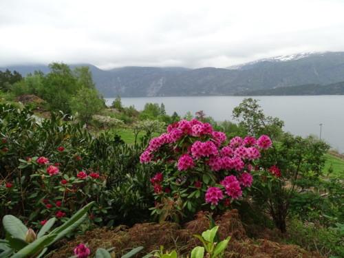 the best attitude 87062 99a0a det var så mange rhododendron som stod i full blomst nå att humlene var  helt bedøvde