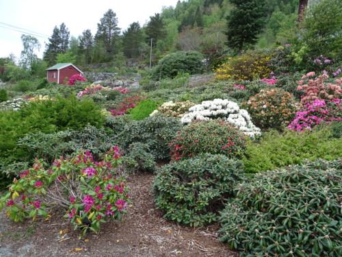 buy popular dbdbb da12d dette er bare litt av hagen,det var så mye mere,en hage bygd opp på  berg,der det ikke var noe fra før,det er så herlig ,og en drømmehage etter  mitt hjerte ...