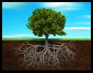 Section in soil showing the root of a tree - 3d render illustration; Shutterstock ID 63001576; PO: The Huffington Post; Job: The Huffington Post; Client: The Huffington Post; Other: The Huffington Post