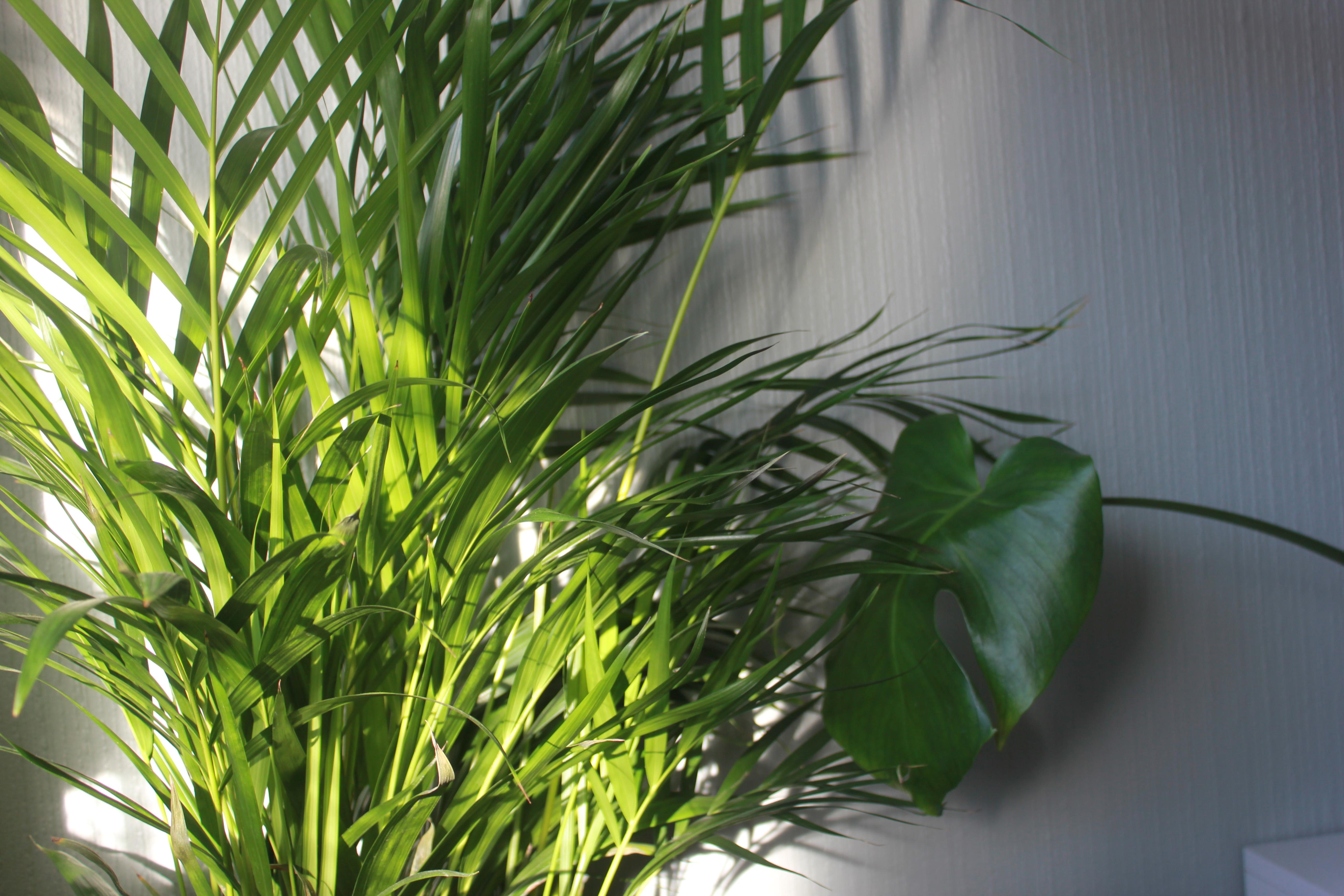 Lettstelte grønne planter