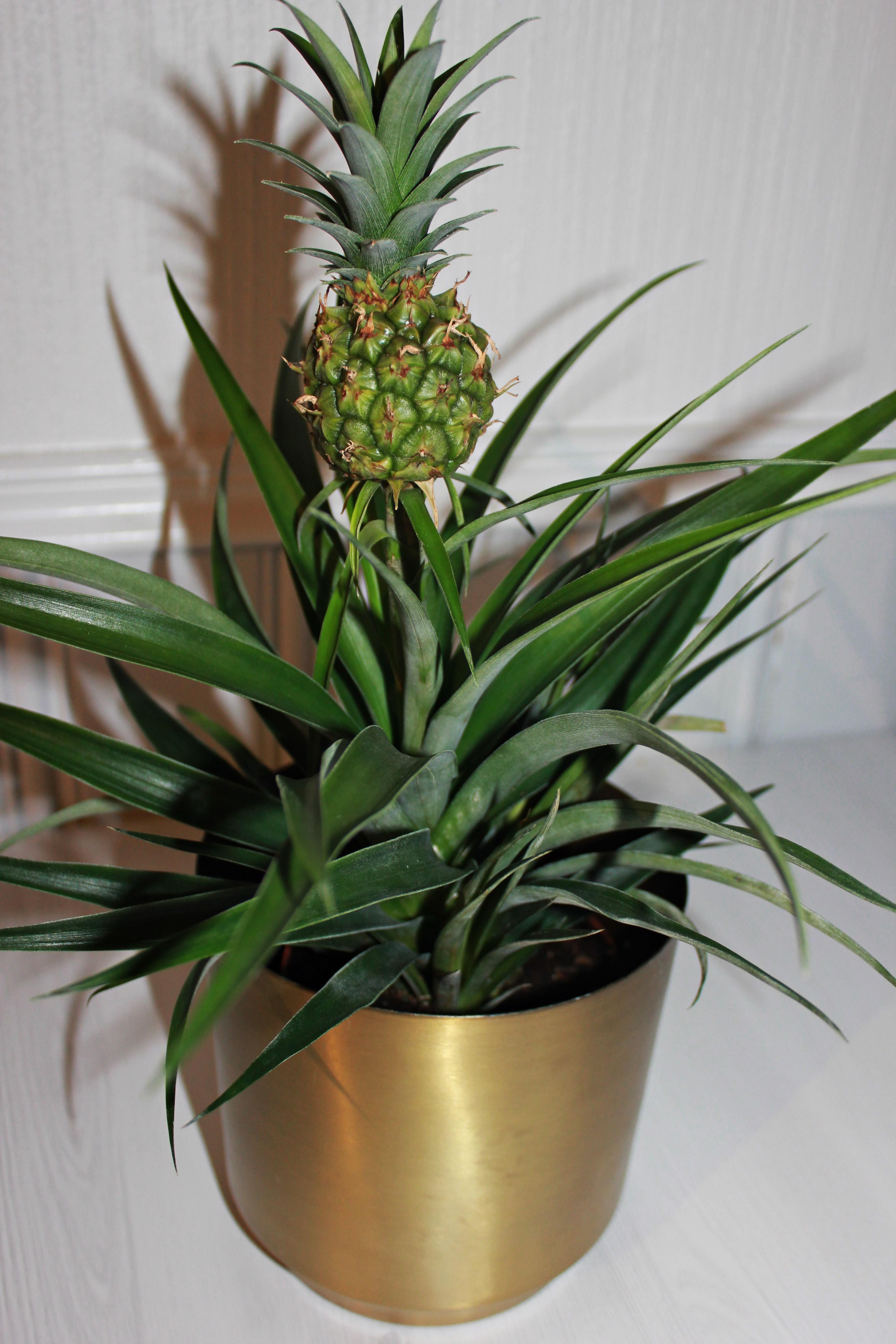 Slik tar du vare på plantene dine