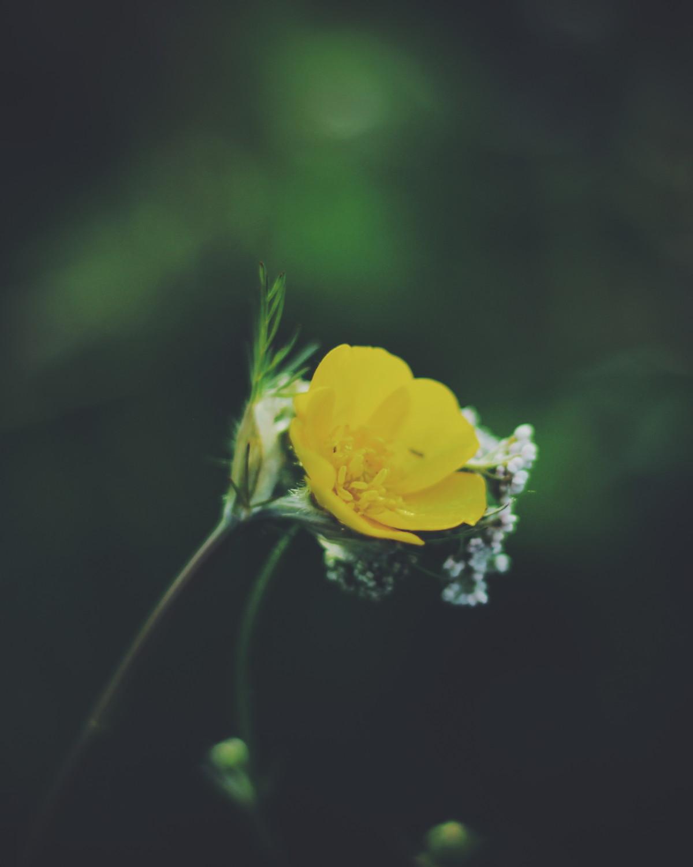 Blomster blogg