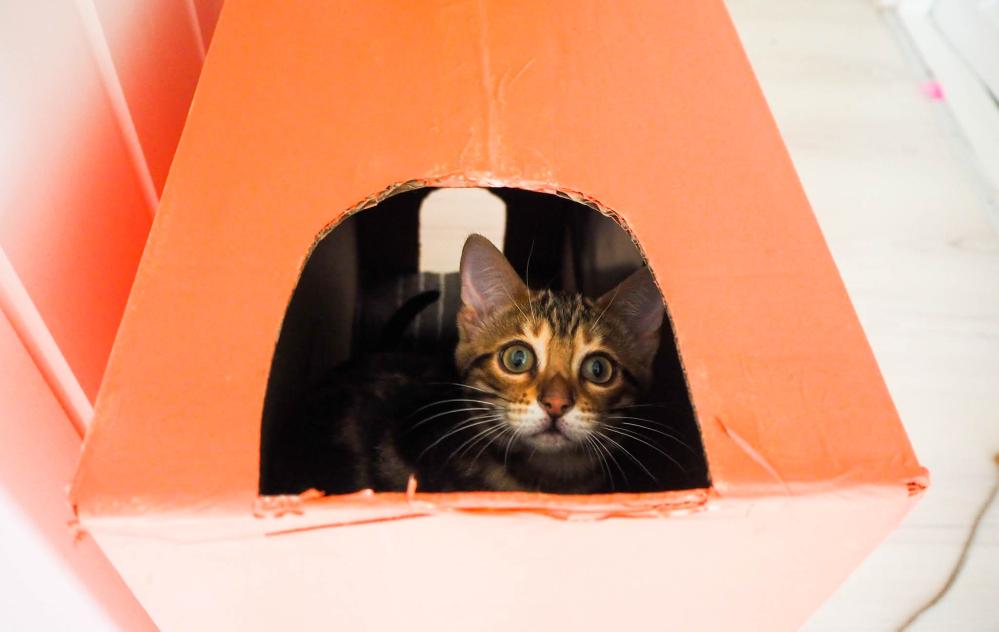 Hjemmelaget kattehus i bruk