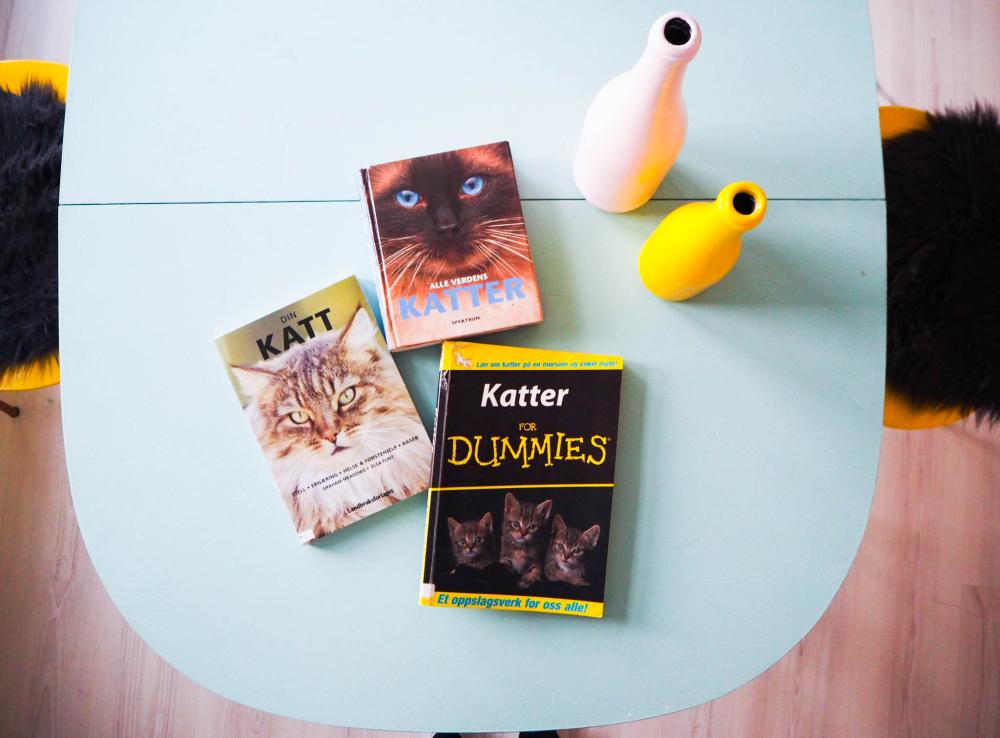 Katter – For dummies