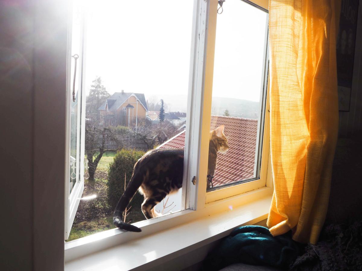 Bengalkatt ute på eventyr