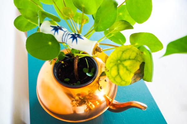 Stor plantefremvisning