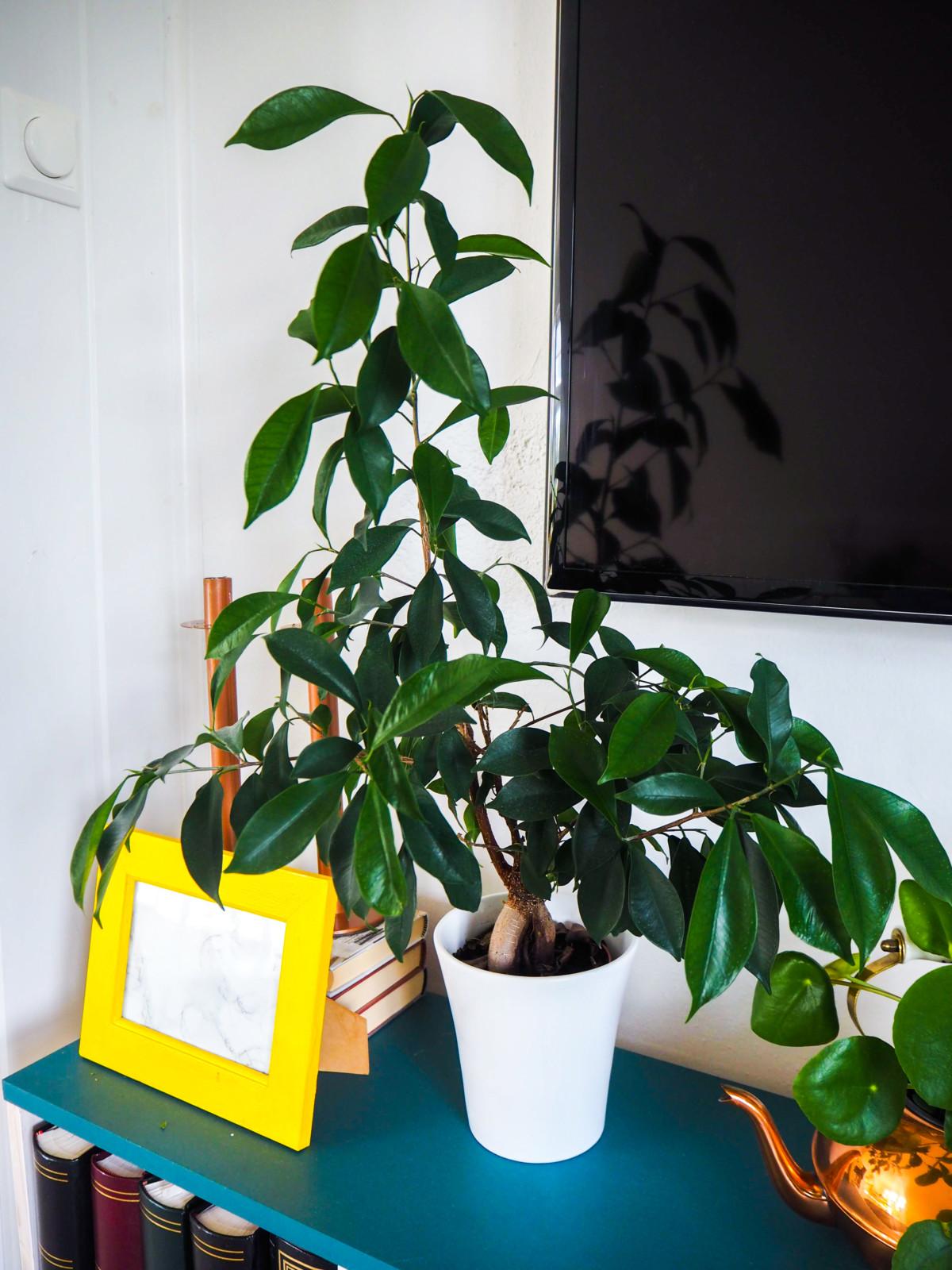 Interiør med plante