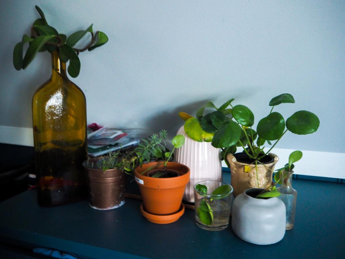 Planter som er ryddet vekk