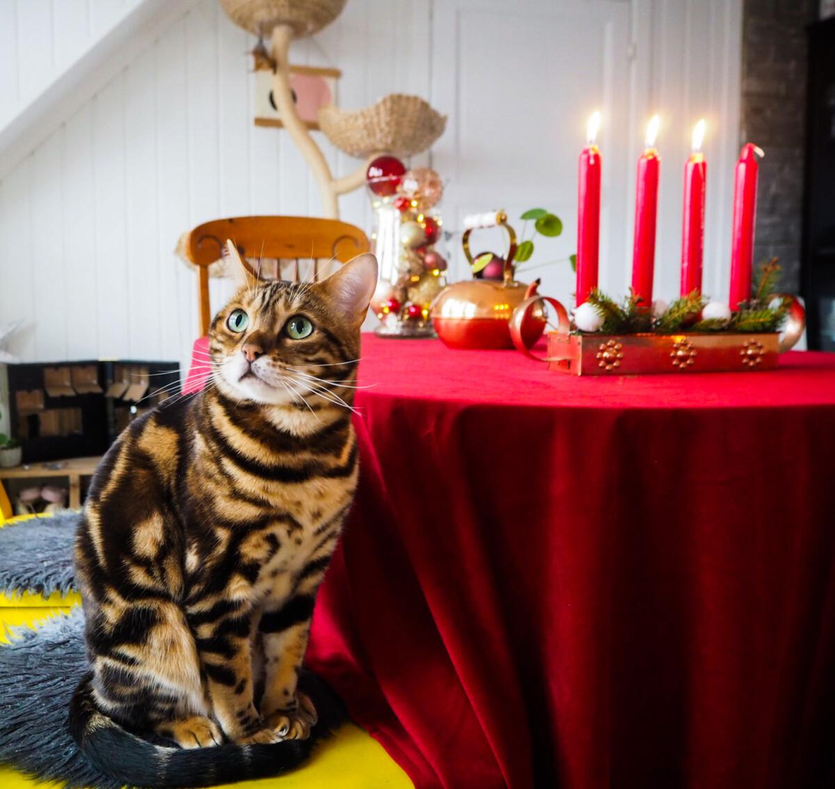 Julepynt og julekatt