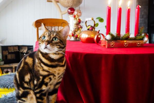 Julen har inntatt hjemmet