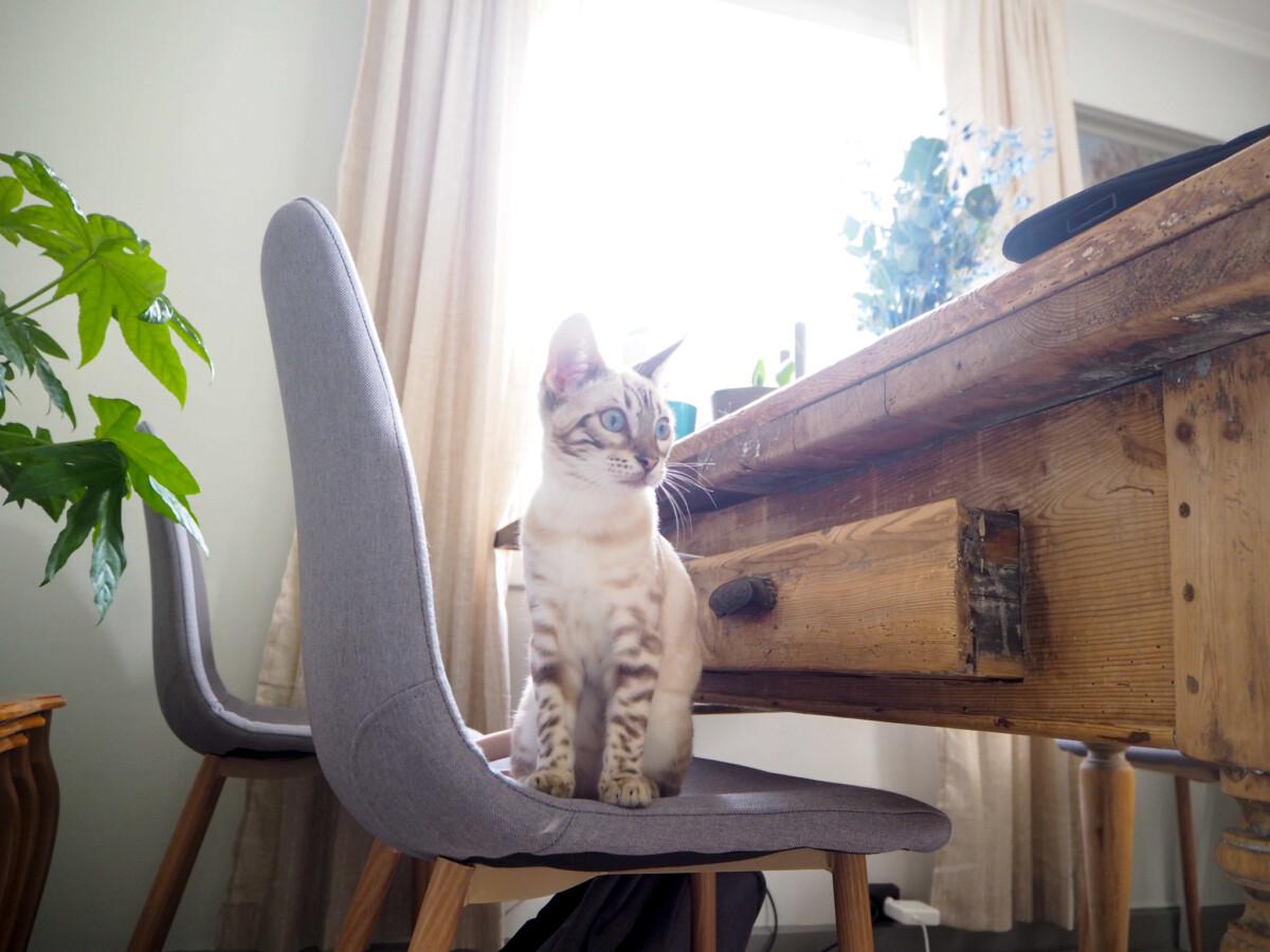 Hyttekontor med katt