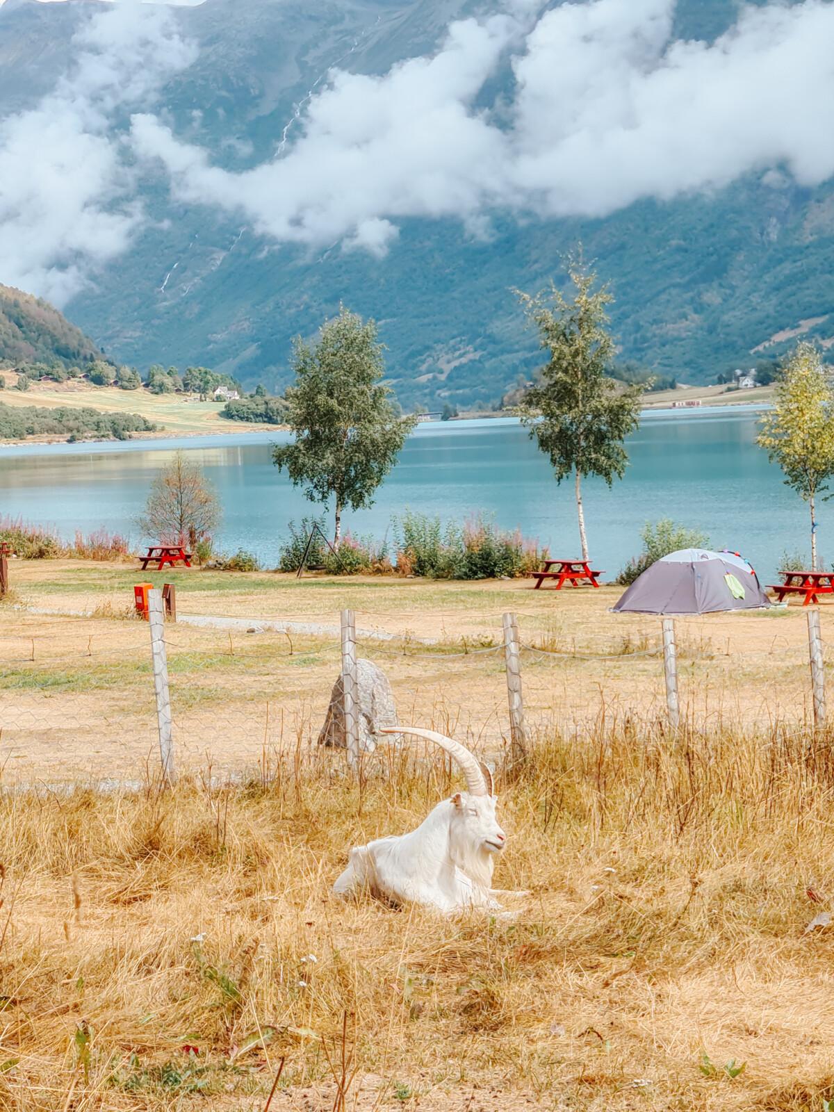 Gryta camping ved Oldevatnet