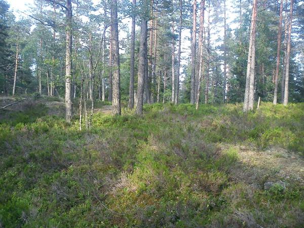 14 juni 2011 Østmarka – Puttåsen