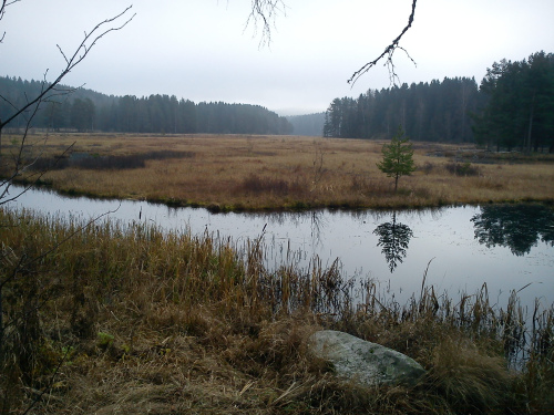 27 oktober 2011 Østmarka (NVR)
