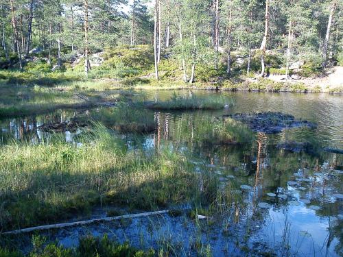 Bilde fra Østmarka