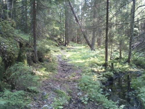 11 juli 2013 Østmarka – Fjellstadputten og Slettfjell