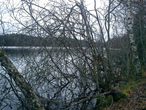 15 november 2012 Østmarka