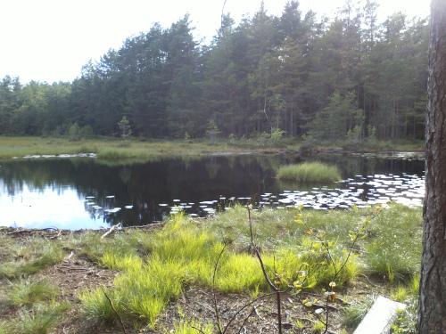 26 juli 2013 Østmarka, Katteputten-Skøyenputten og Slettfjell