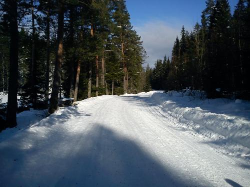 Tur i Østmarka. Bysetra – Skjeldbreia til fots