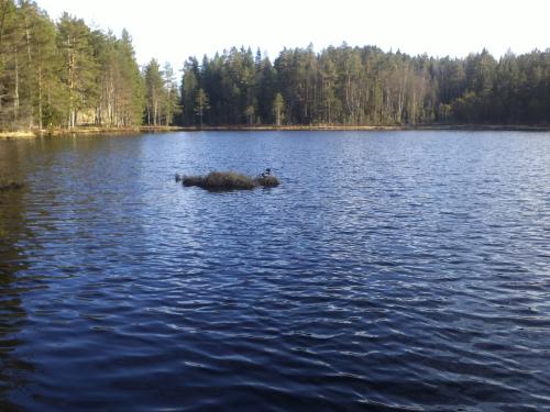 11 november 2013 Østmarka – Landevei