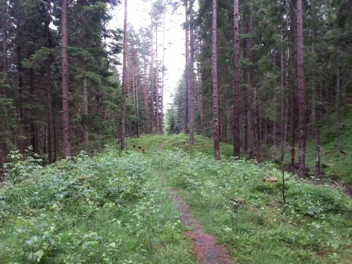 Østmarka; Finfallåsen – Karismyr – Skullerud…