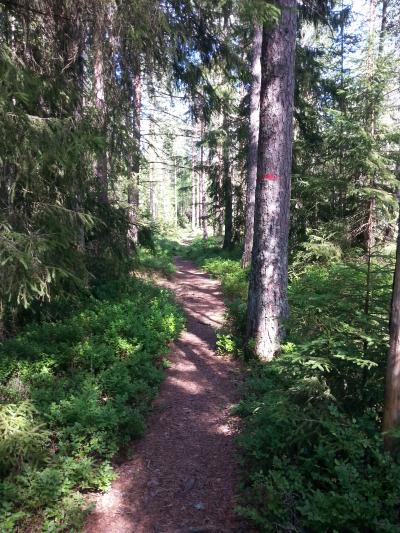 Østmarka; Stiløping mellom Nøklevann og Elvåga…