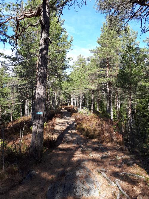 Østmarka; Haraløkka – Kroktjern – Slettfjell…