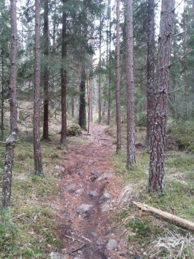 Østmarka; Trolldalsåsen – Smørhullet – Fingerbølmyrene…