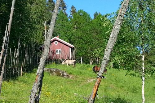 Kloppa-runden fra Haraløkka via Siggerud…